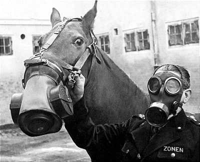Horse gas mask war
