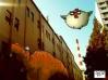 dinosaur in street under chicken 2